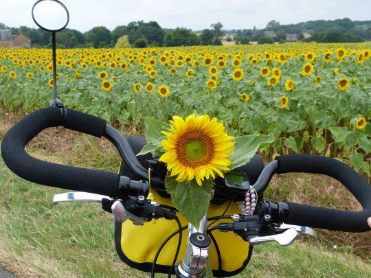 Fietsreis fietsbedevaart fietsblog reisverslag review Santiago de Compostela zonnebloem