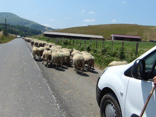 Fietsreis fietsbedevaart fietsblog reisverslag review Santiago de Compostela Baskenland