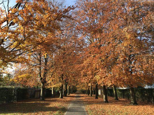 Fietsroute reisverslagen fietsblog review Berlare kasteeldreef
