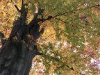 Fietsroute reisverslagen fietsblog review park Mesen Lede beuk herfst