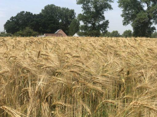 Fietsroute fietsblog review Oude Dijken