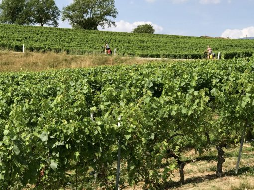 Fietsreis reisverslag viarhona dagboek wijngaard
