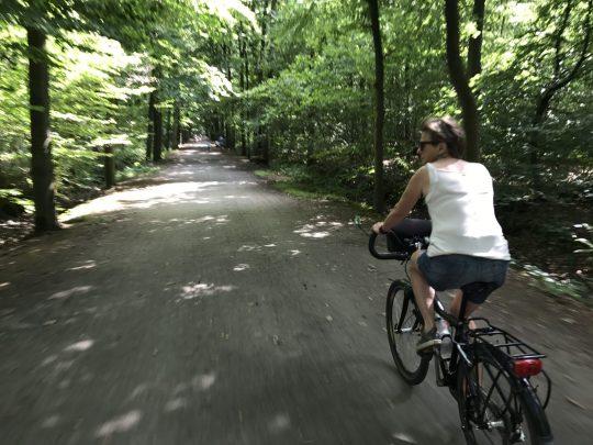 Fietsroute fietsblog review Buggenhoutbos