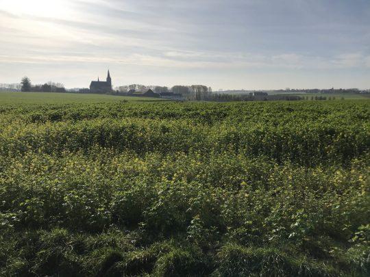 Fietsroute fietsblog review Zuunbeekroute Bellingen Onze-Lieve-Vrouwkerk