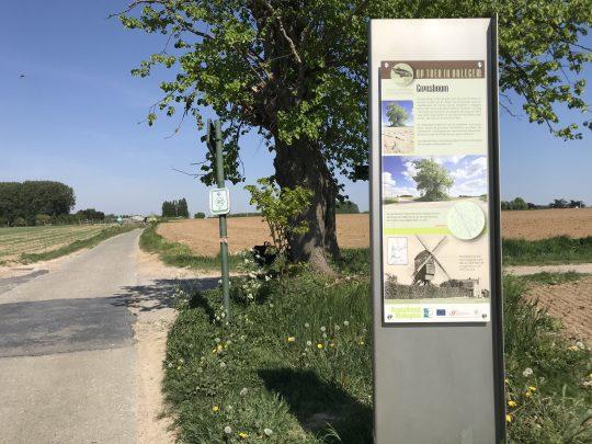 Fietsroute, fietsblog, review, rodelandroute, Elene, grensboom