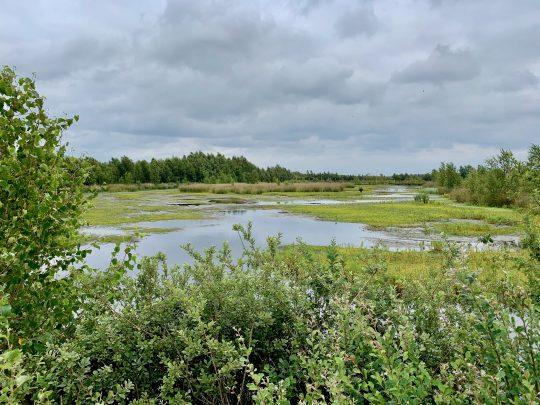 Fietsroute, fietsblog, review, rondje Drenthe, Bargerveen