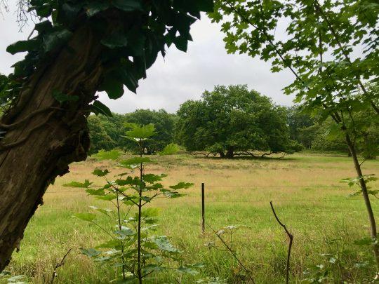 Fietsroute, fietsblog, review, rondje Drenthe, Strubben-Kniphorstbos