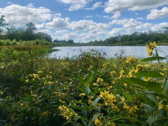 Fietsroute, fietsblog, review, rondje Drenthe, Vledderveen