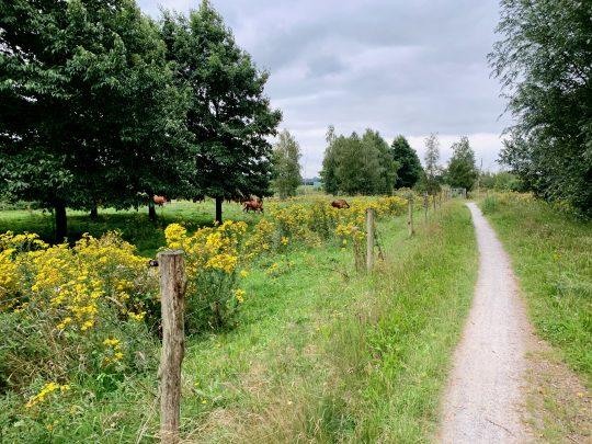 Fietsroute, fietsblog, review, rondje Drenthe, Barger-Compascuum