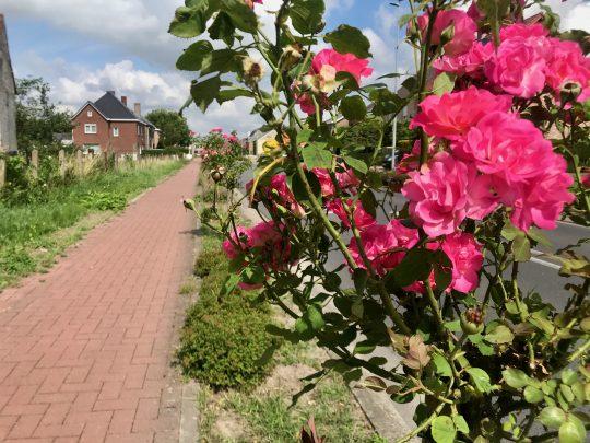 Fietsroute, fietsblog, review, begoniaroute, rozen