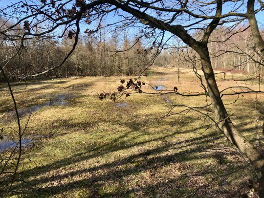Fietsroute, fietsblog, balenbergroute, natuurgebied Vorsdonkbos-Turfputten