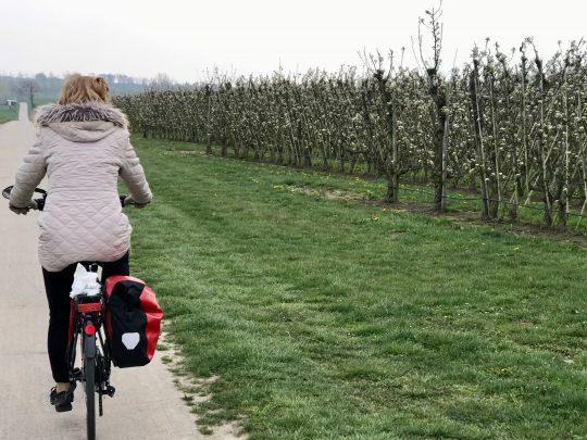 Fietsroute, fietsblog, fietsparadijs, Limburg, fruitstreek, bloesemroute