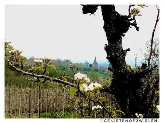 Fietsroute, fietsblog, fietsparadijs, Limburg, fruitstreek, bloesems